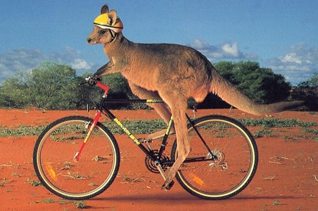Kangaroo Bicycling
